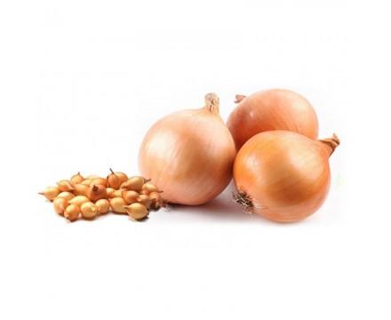 Озимый лук севок — Сорт РАДАР